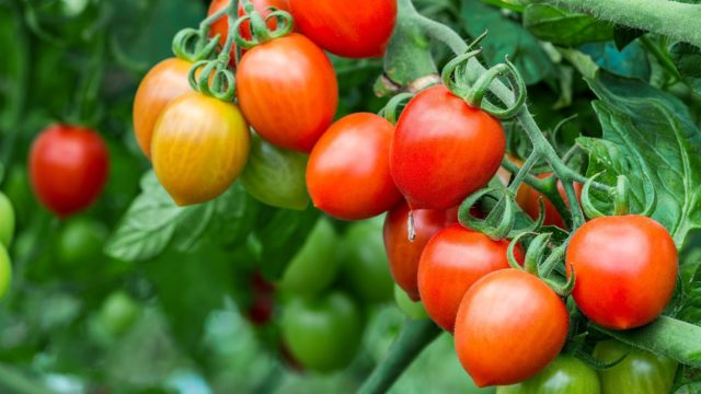 7 Tips for a High-Yield Vegetable Garden